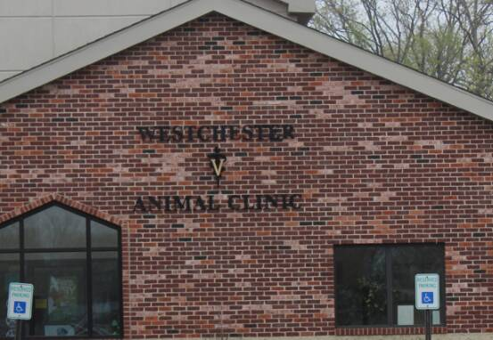 Westchester Animal Clinic