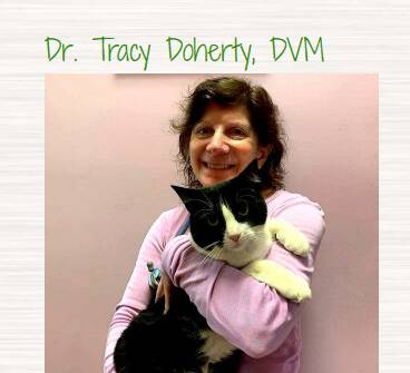 Dr. Tracy Doherty, DVM