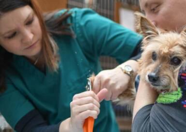 Lorain Animal Clinic Doctors