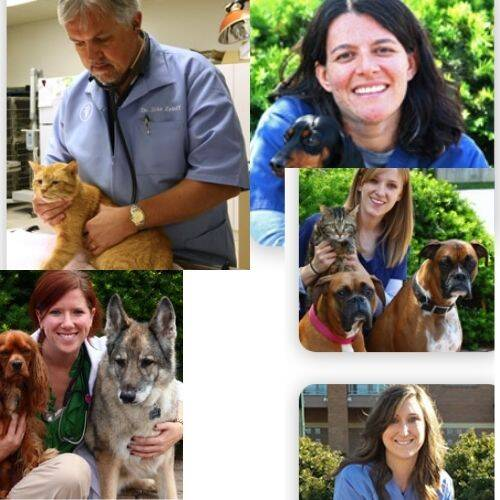 Towne Square Animal Clinic Doctors