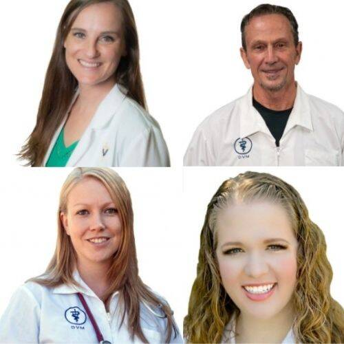 Rockledge Animal Clinic Veterinarians