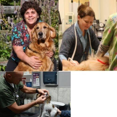 Fremont Animal Hospital Doctors